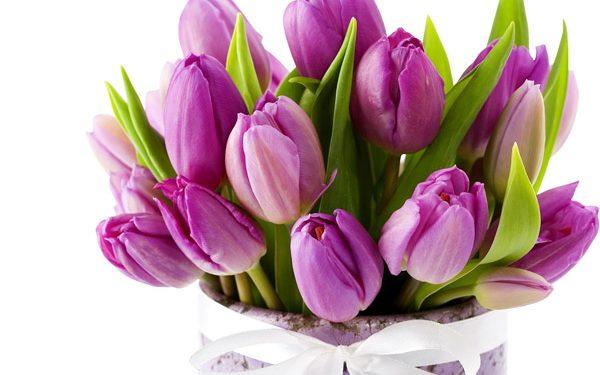 Hình ảnh hoa tulip rực rỡ như gửi gắm đến bạn lời chúc sinh nhật đầy hạnh phúc và vui vẻ
