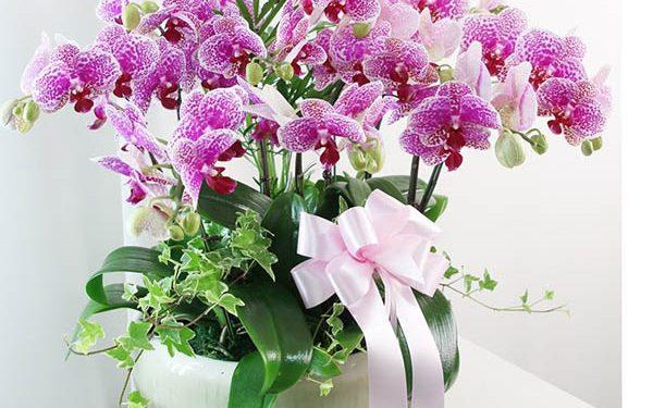 Hoa địa lan chúc mừng sinh nhật đầy trang trọng với niềm yêu mến