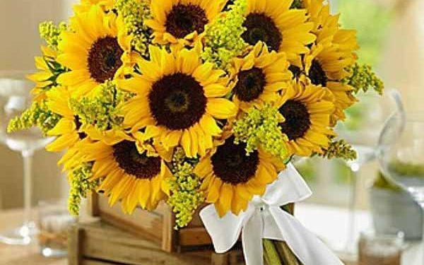 Những lẵng hoa hướng dương hy vọng với sức sống căng tràn