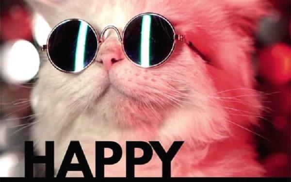 Trông chú mèo trông ngộ nghĩnh và rất tinh nghịch bạn nhỉ?